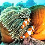 Great Barrier Reef animals